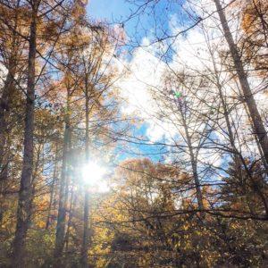 キャンプ場の林