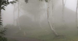 霧の中の散歩2