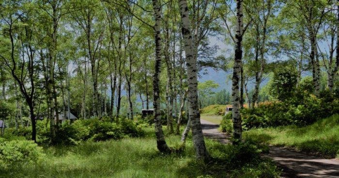 ほたか牧場キャンプ場の森
