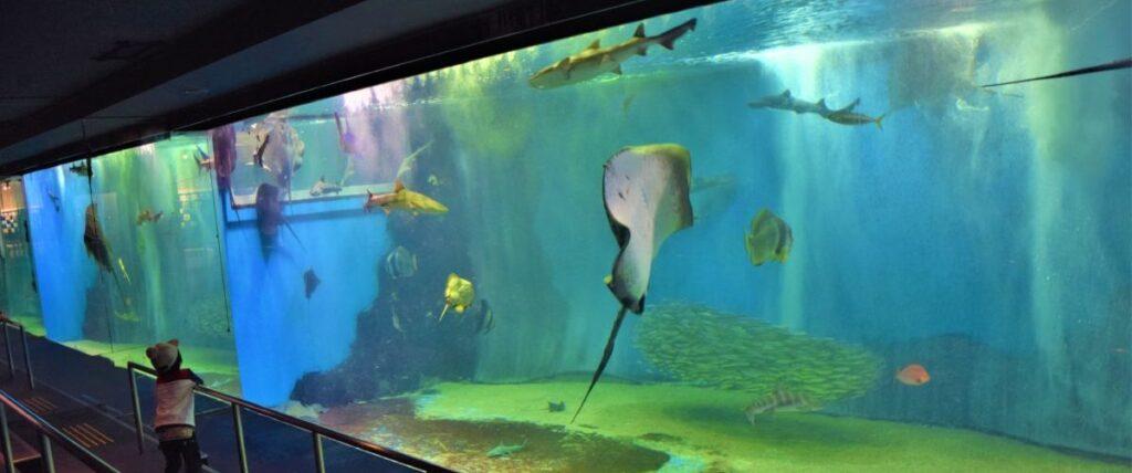 越前松島水族館の水槽
