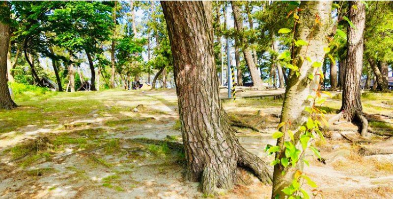 園家山キャンプ場のテントサイト