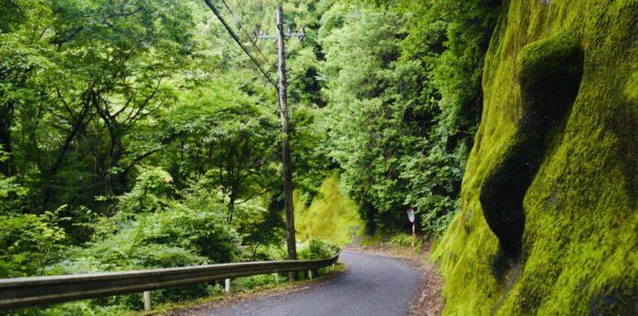 黒坂石バンガローテント村までの道