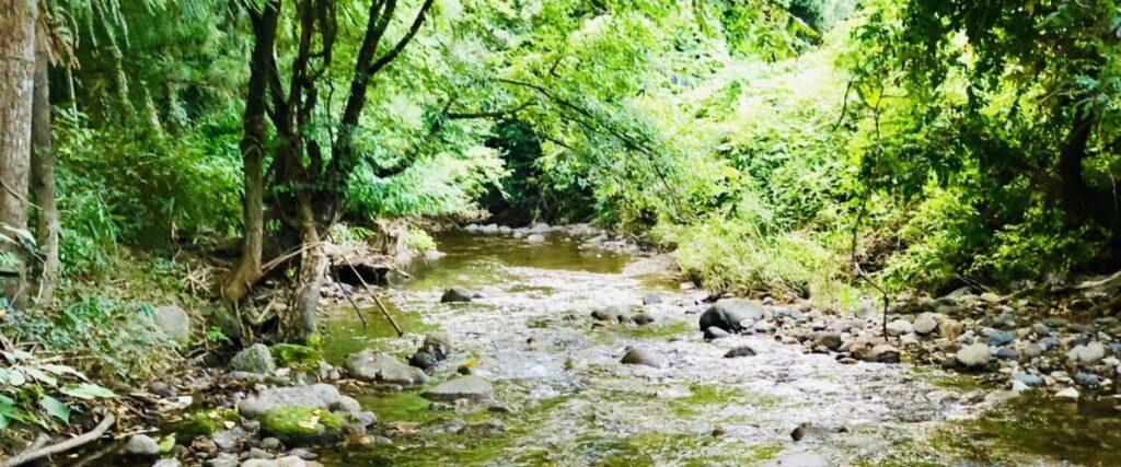水位が低くなってしまった、近所の川